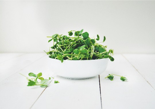 Sprouts, Pea Shoots