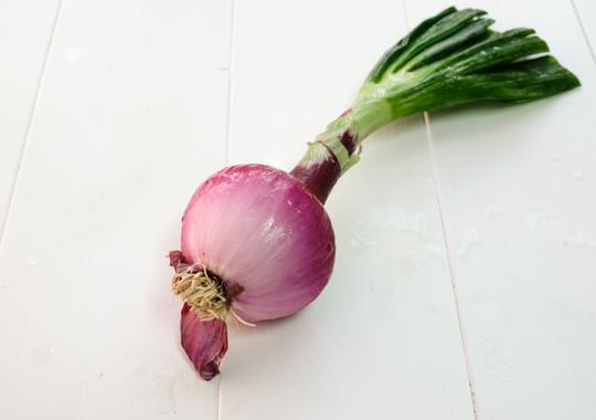 Onion (Red, w top)